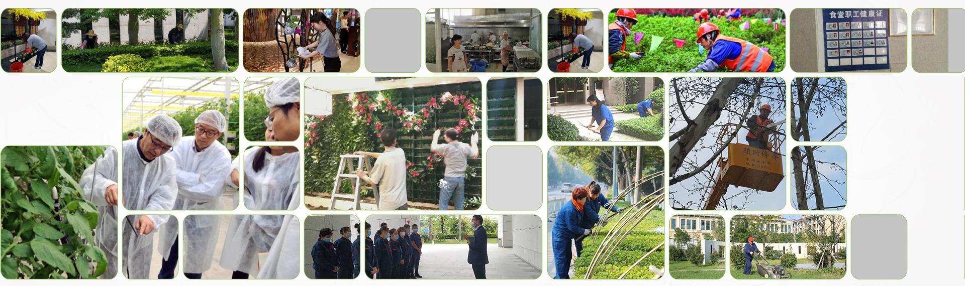 绿植租摆养护和技术团队